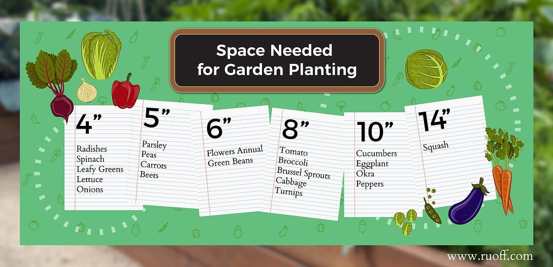 Infographic with the space needed for planting